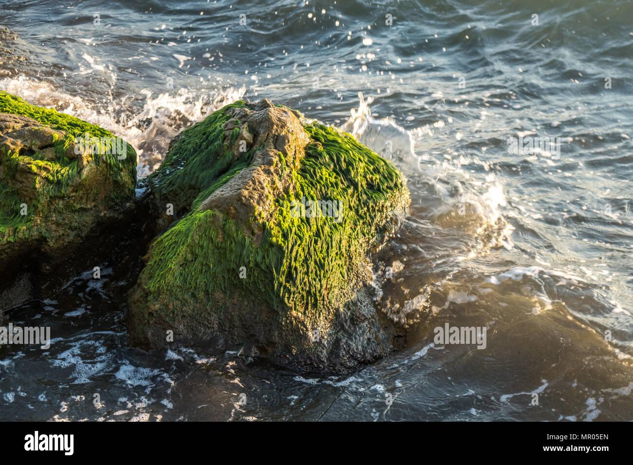 Green moss stuck on stone around sea waves. Sea waves hit the shore. Stock Photo