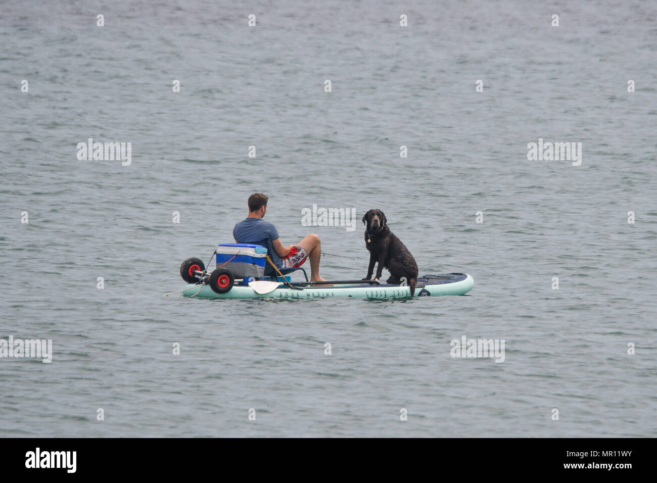 Longrock, Cornwall, UK, 25th May 2018. UK Weather. It was warm and sunny this afternoon on the sea near Marazion. This man and his dog had some quality time out fishing together on their paddleboard. Credit: Simon Maycock/Alamy Live News - Stock Image