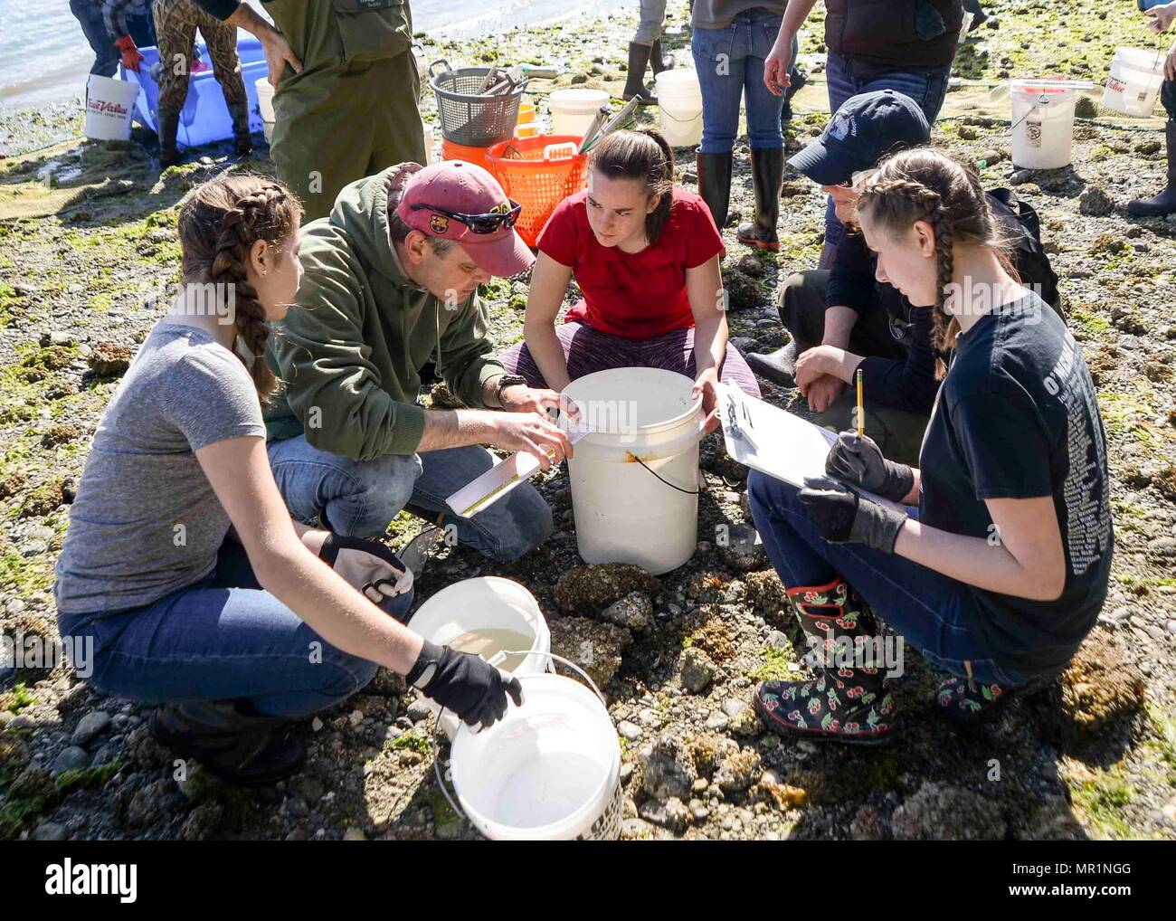 170428-N-VH385-027 INDIAN ISLAND, Wash. (April 28, 2017) – Jake Gregg, a fishery biologist with the United States Geological Survey (USGS), measures a fish with students from Blue Heron Middle School during a community outreach beach seining at Naval Magazine Indian Island. This is the third year the USGS has teamed up with Blue Heron Middle School and Naval Magazine Indian Island to conduct beach seinings in preparation for the Kilsut Spit waterflow to be opened between Marrowstone and Indian Island. (U.S. Navy photo by Mass Communication Specialist 3rd Class Wyatt L. Anthony) - Stock Image