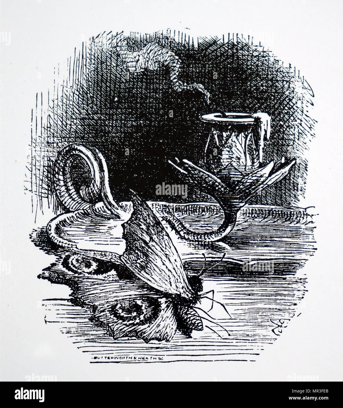 Illustration depicting a moth which was killed by a candle flame. Dated 19th century - Stock Image