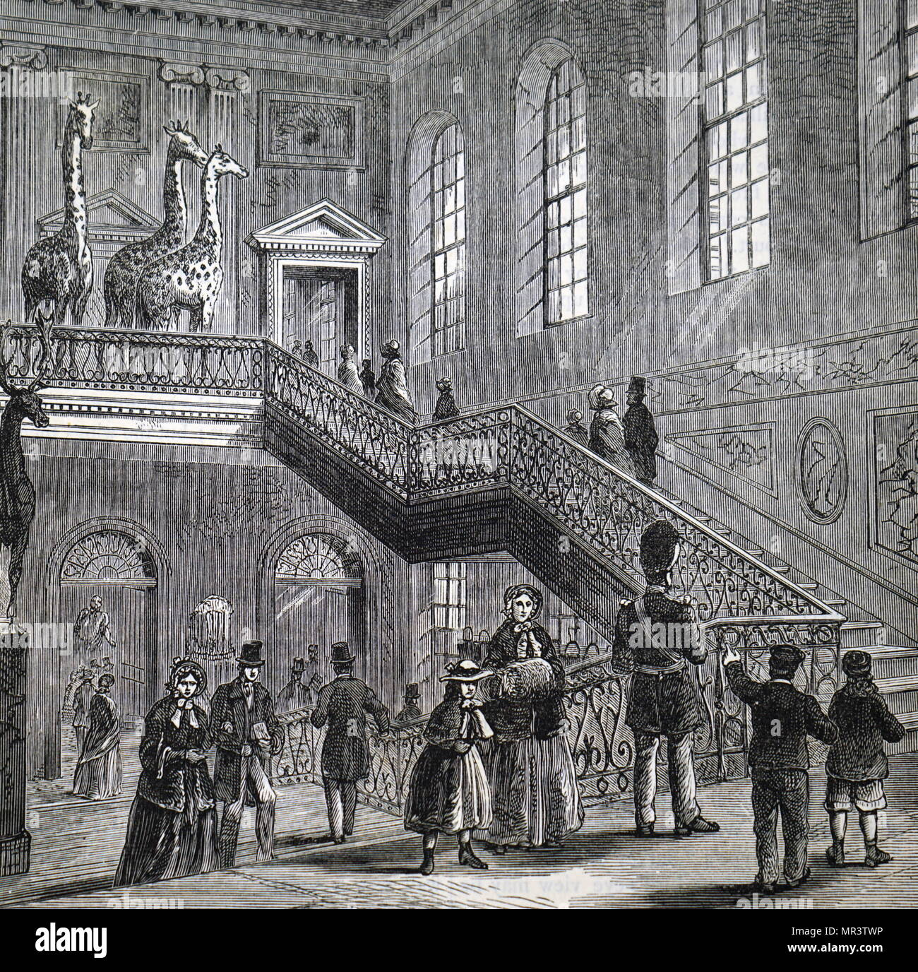 Illustration depicting the grand staircase at Montagu House, Bloomsbury, the first home of the British Museum. Dated 19th century - Stock Image