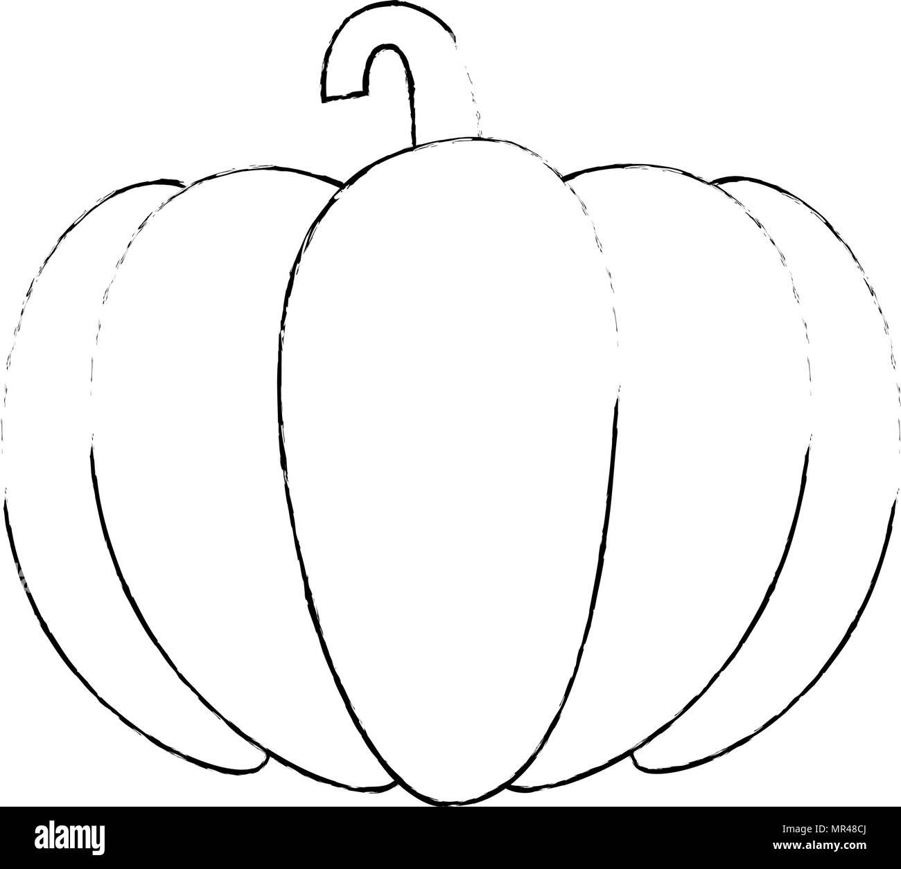 fresh pumpkin vegetarian food - stock image