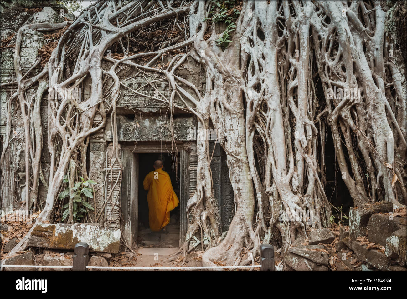 Monk, giant tree and roots in temple Ta Prom Angkor wat Cambodia landmark Stock Photo
