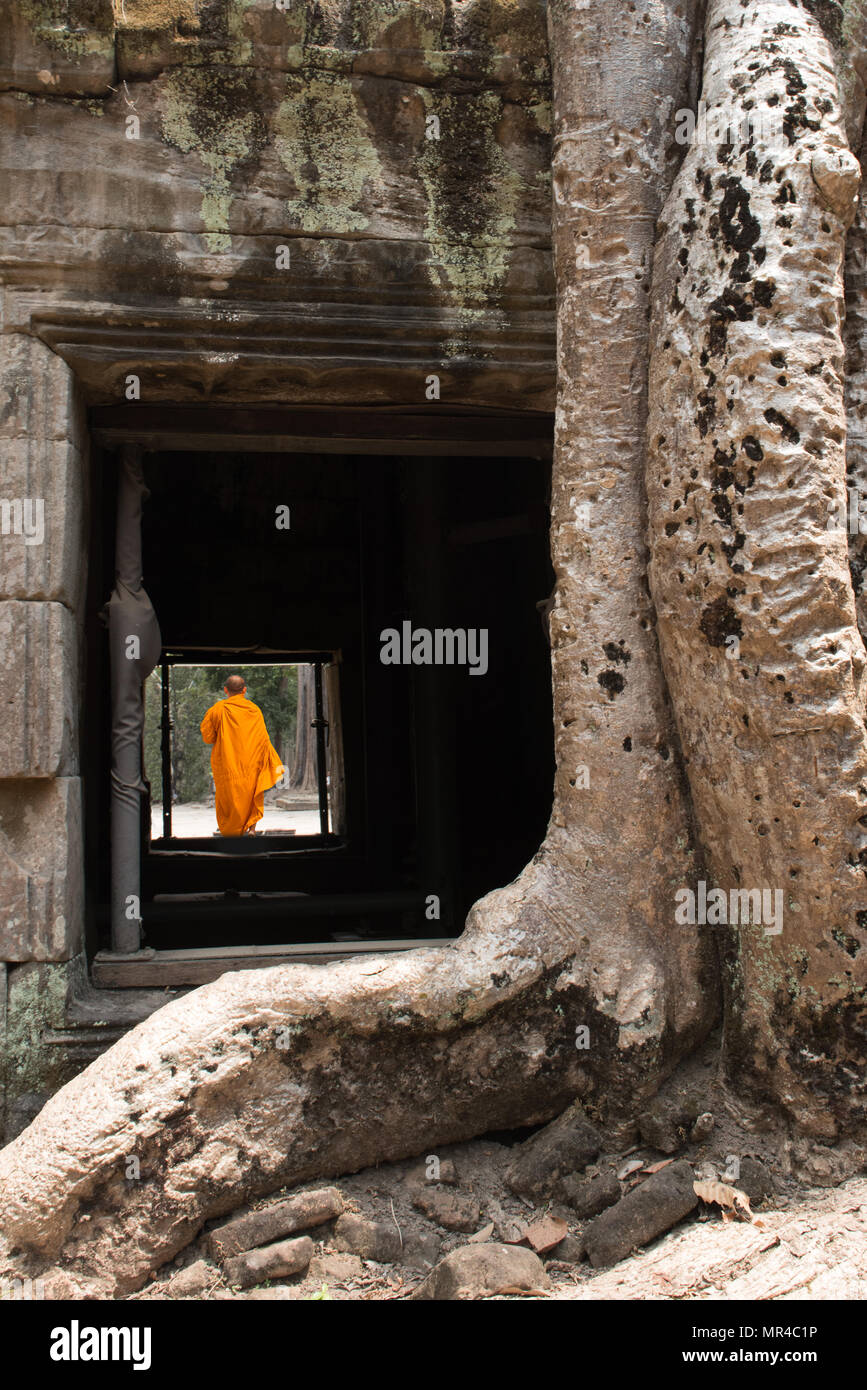 Monk, giant tree and roots in temple Ta Prom Angkor wat Cambodia landmark - Stock Image