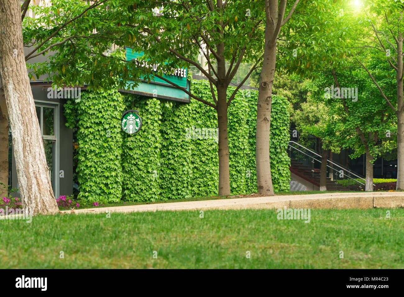 SHANGHAI, CHINA - APR 2018: Starbucks coffee shop in the green leaf wall, largest coffeehouse company in the world, coffee in the garden concept - Stock Image