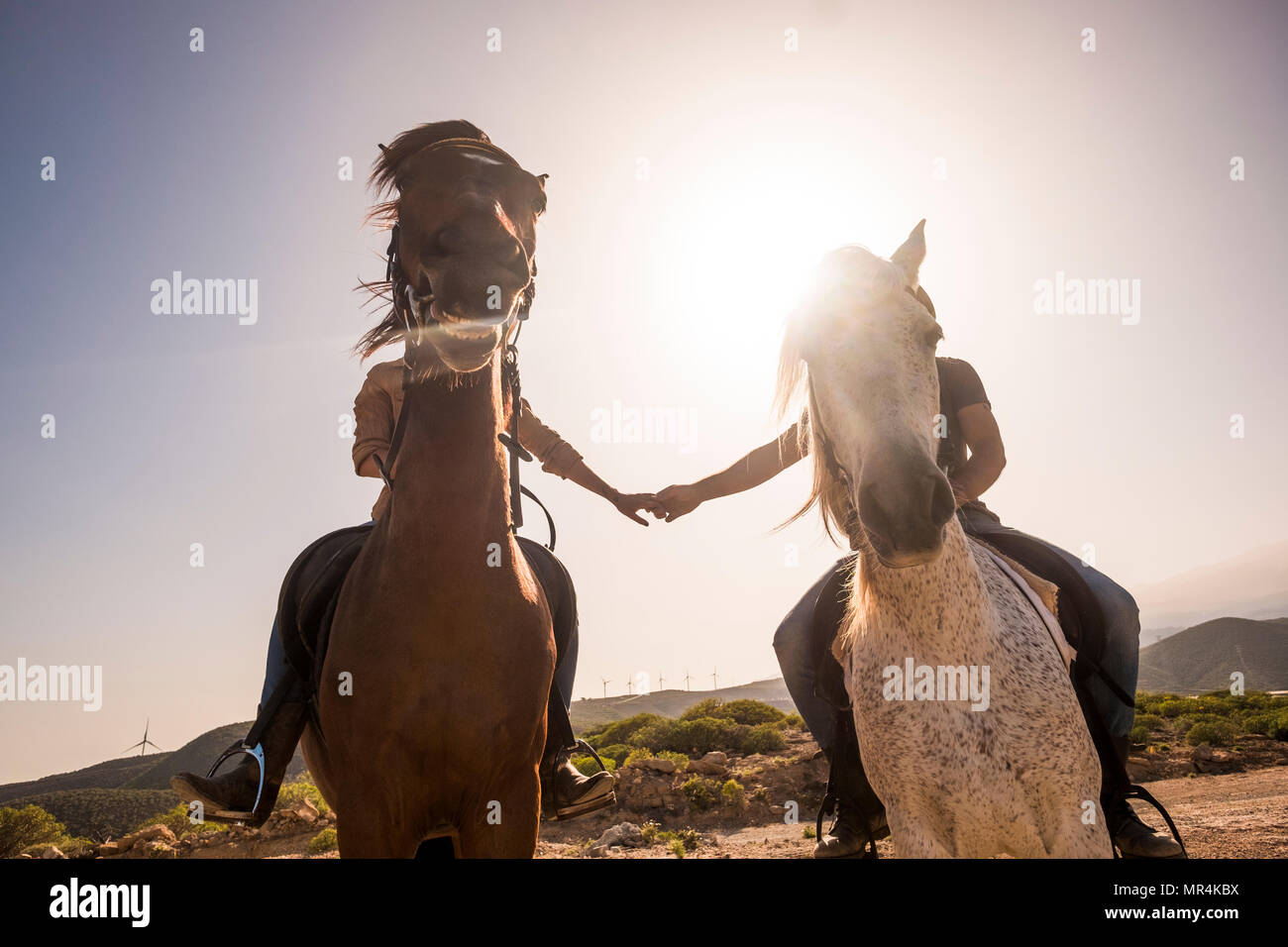 hands touching with love but horse face bomb the pictures for a final funny image with horse smiling. backlight and love concept in the nature leisure - Stock Image
