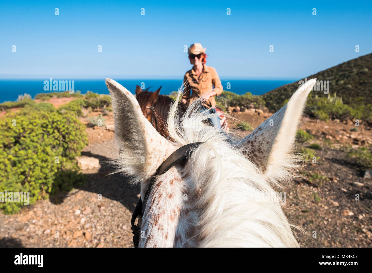 nice rare portrait of a beautiful girl ride a horse made by another rider on a white horse. funny and savage picture for a couple in contact with the  - Stock Image