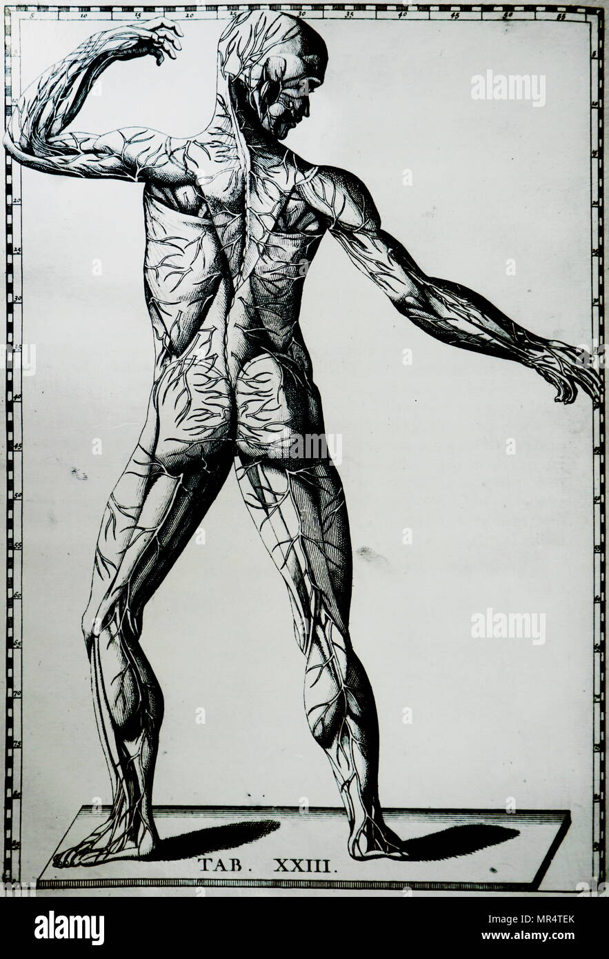 Print Of A Human Nervous System By Bartolomeo Eustachi D1574 One