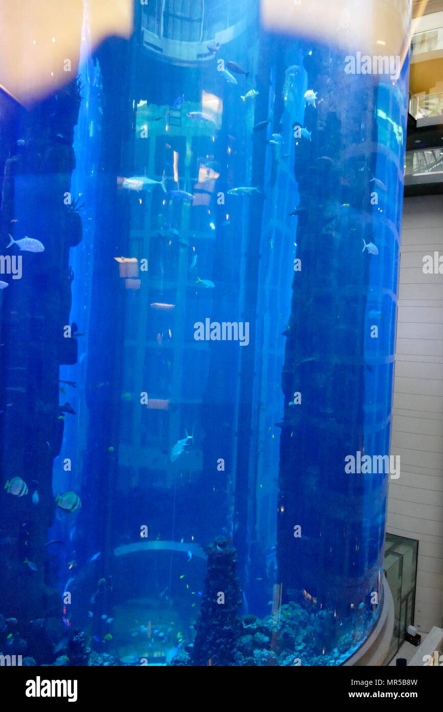 Photograph taken of the AquaDom in Berlin, Germany, is a 25 m (82 ft) tall cylindrical acrylic glass aquarium with built-in transparent elevator. It is located at the Radisson Blu Hotel in Berlin-Mitte. - Stock Image