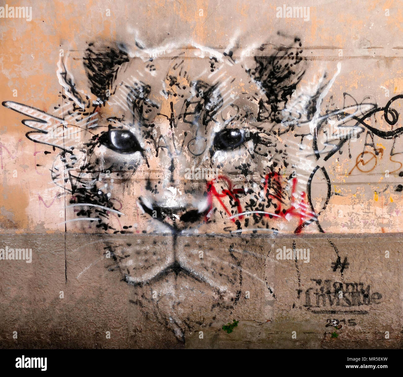 Graffiti of a lioness in the Arsenale district of Venice, Italy - Stock Image