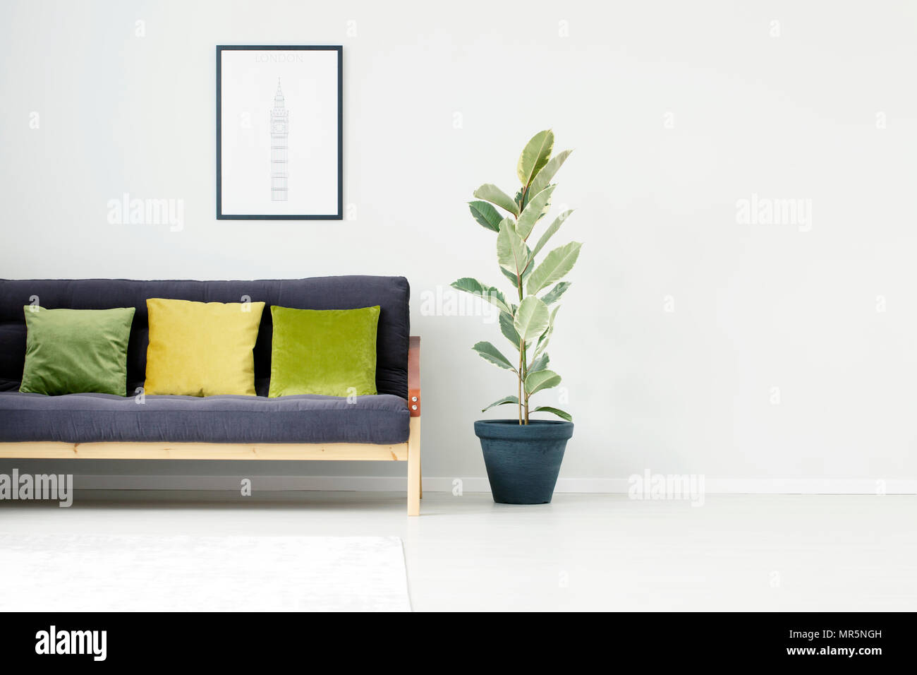 Picture of: Ficus Tree Next To Black Sofa With Green And Yellow Pillow In Living Room Interior With Poster And Copy Space Stock Photo Alamy