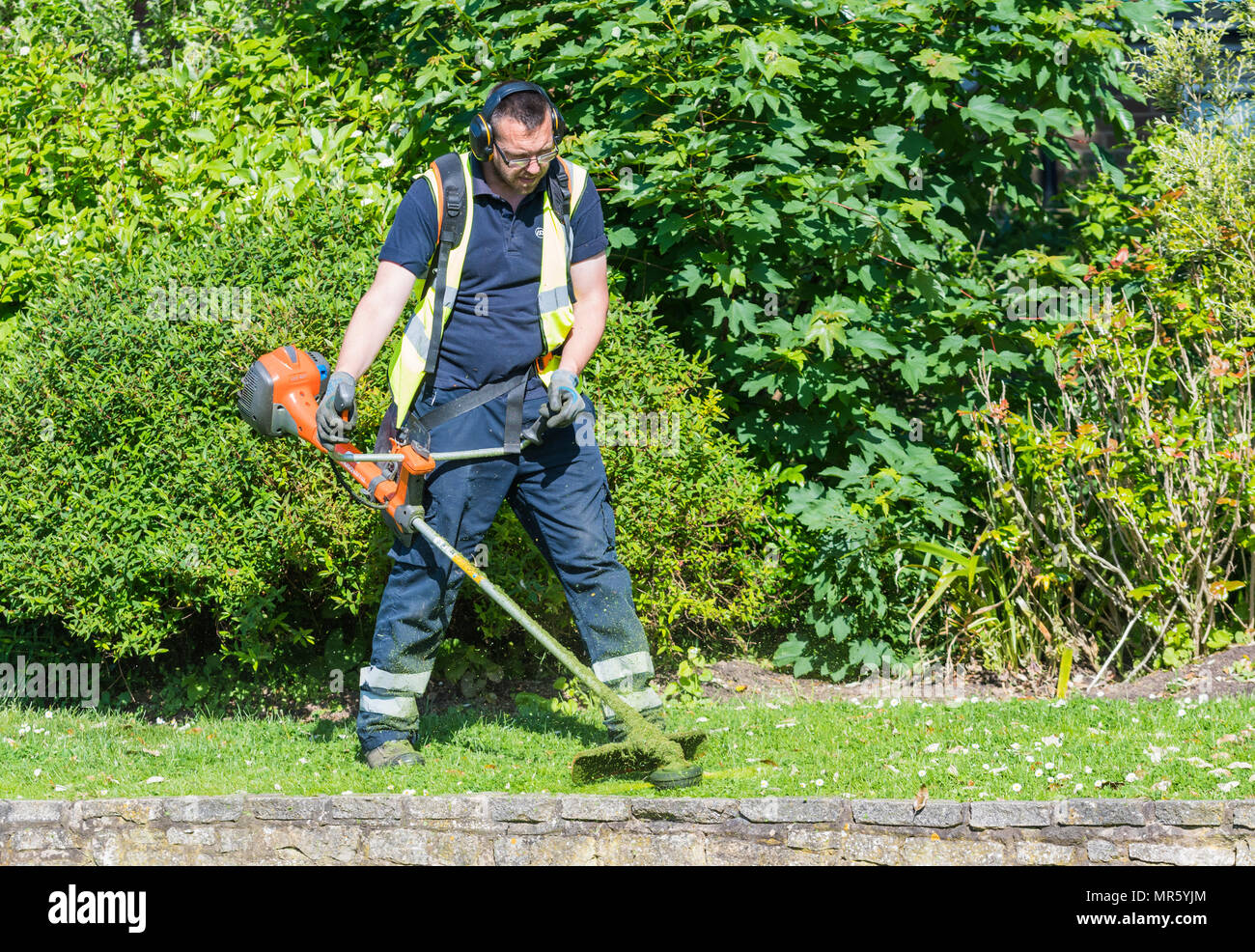 Man strimming grass with a strimmer / trimmer in late Spring in a park in the UK. - Stock Image