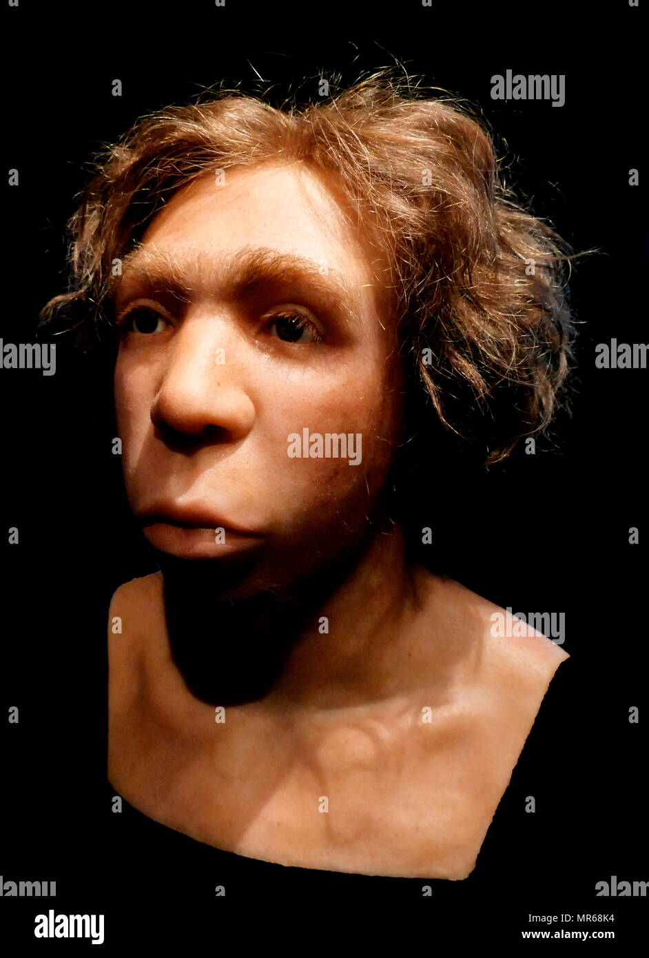 Reconstructed bust of a Neanderthal Man from Le Moustier, France, 45,000 BC. - Stock Image