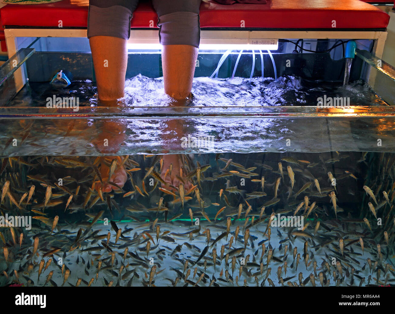 Feet hanging in aquarium with fish, to remove dead skin from feet, Phuket, Thailand - Stock Image