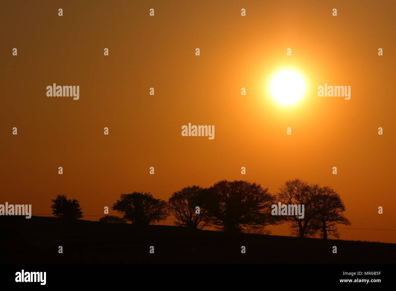 The sun setting behind trees in Swillington, Leeds. - Stock Image