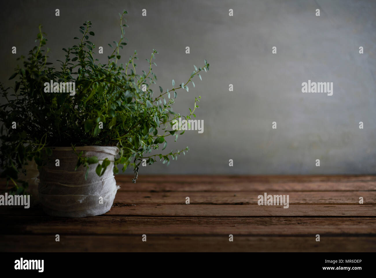 A beautiful, messy oregano plant on a worn wood table. - Stock Image