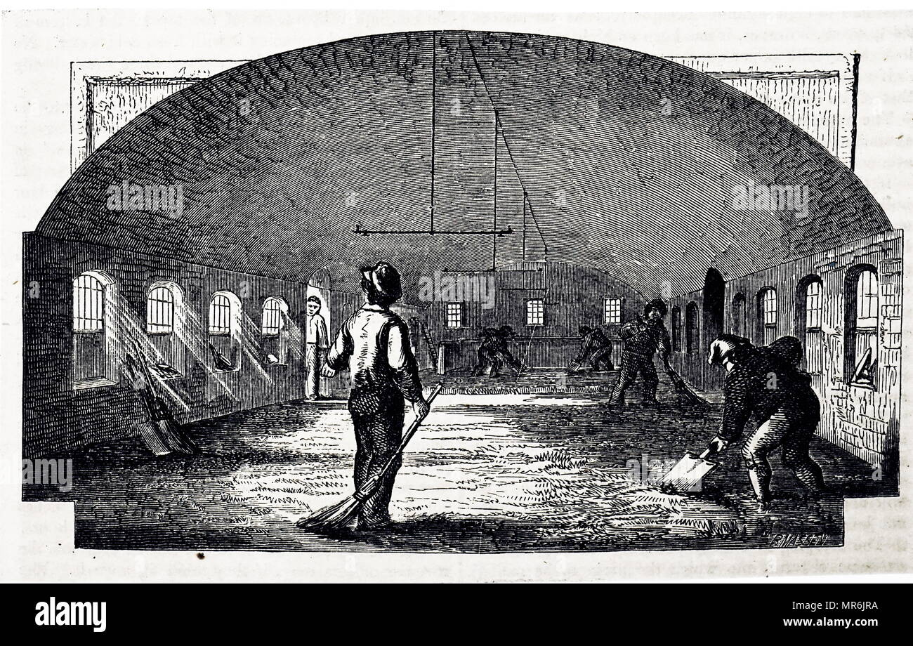 Engraving depicting the process of turning barley into malt: grain was first steeped in a tank at the far end of the barn: after at least 40 hours it was placed in a rectangular heap or couch on the malting floor for about 96 hour, by which time it had risen 10 degrees Fahrenheit in temperature. It was then spread on the floor and turned 2 or 3 times a day for 12-14 days. Dated 19th century Stock Photo