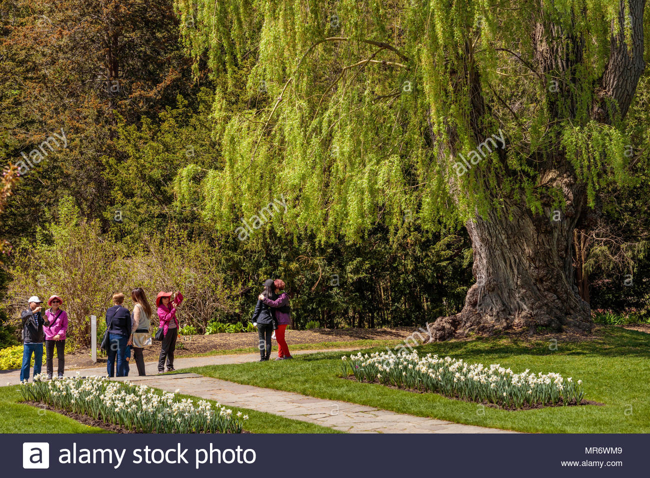 Group of people under trees in spring in Edwards Gardens a garden ...