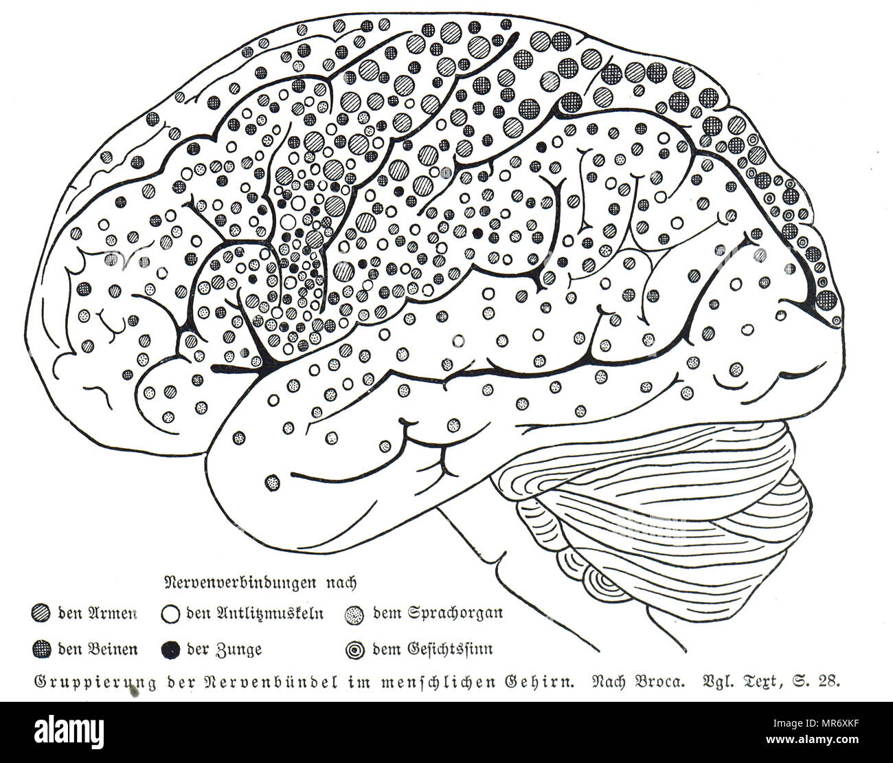 Map of nerve bundles in the human brain by Paul Broca. Paul Broca (1824-1880) a French physician, anatomist and anthropologist. Dated 19th century - Stock Image