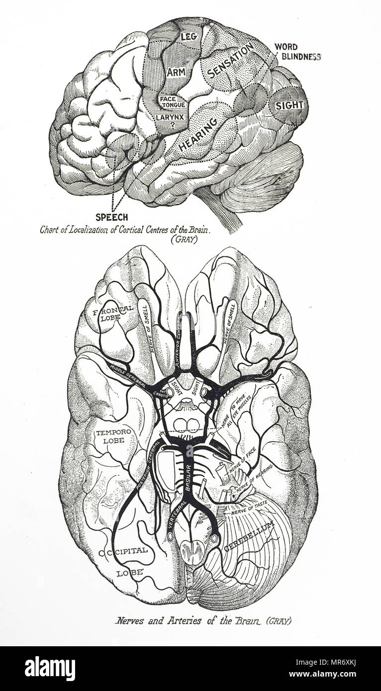 Engraving depicting a human brain. Top: Chart of localisation of cortical centres. Bottom: Nerves and arteries. Dated 20th century - Stock Image