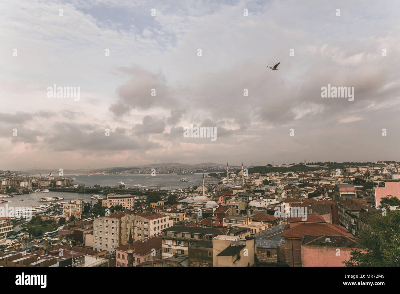 bird flying above roofs in Istanbul, Turkey - Stock Image