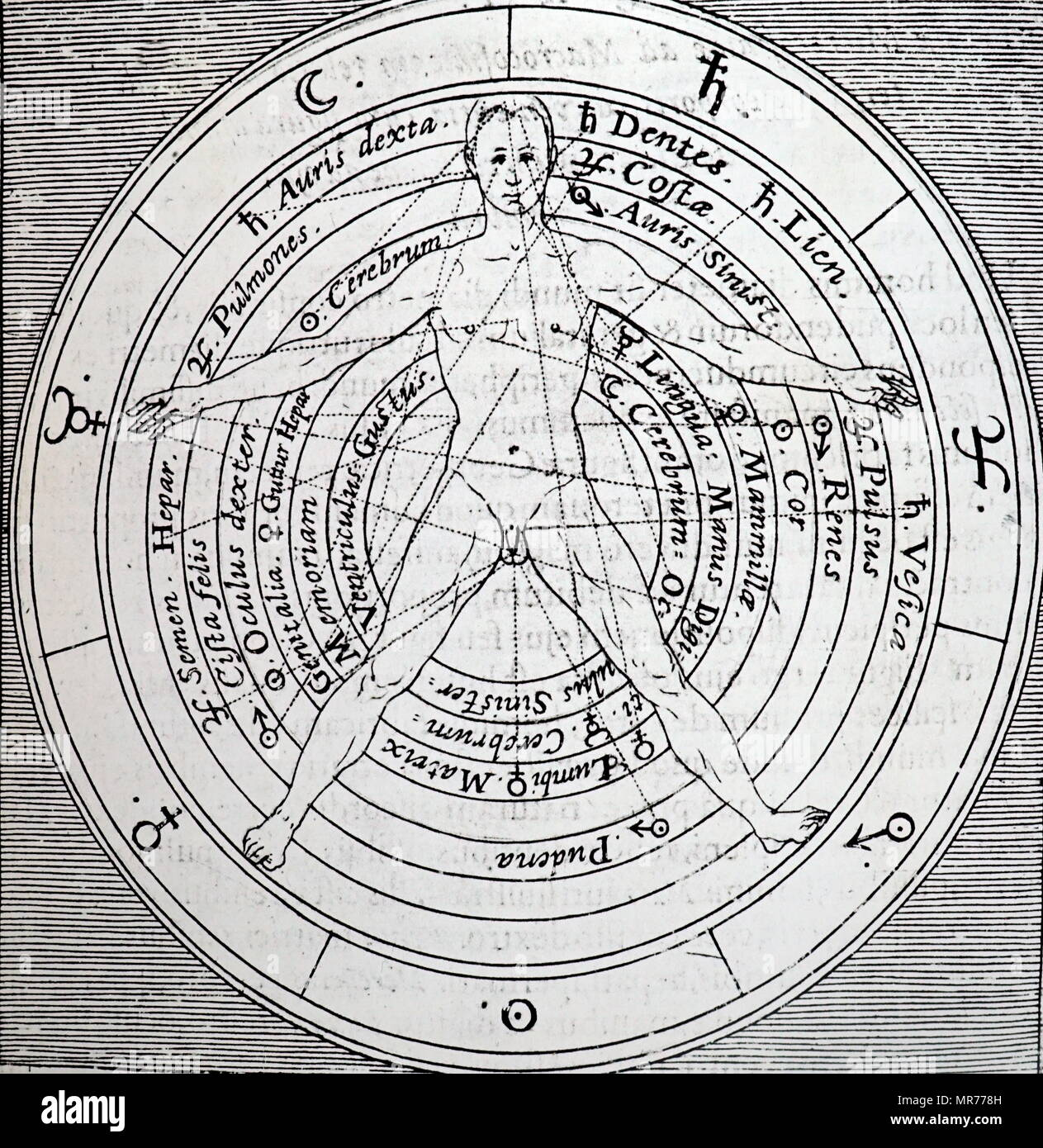 Woodblock engraving depicting the organs of the body and the planetary influences on them. Dated 17th century - Stock Image