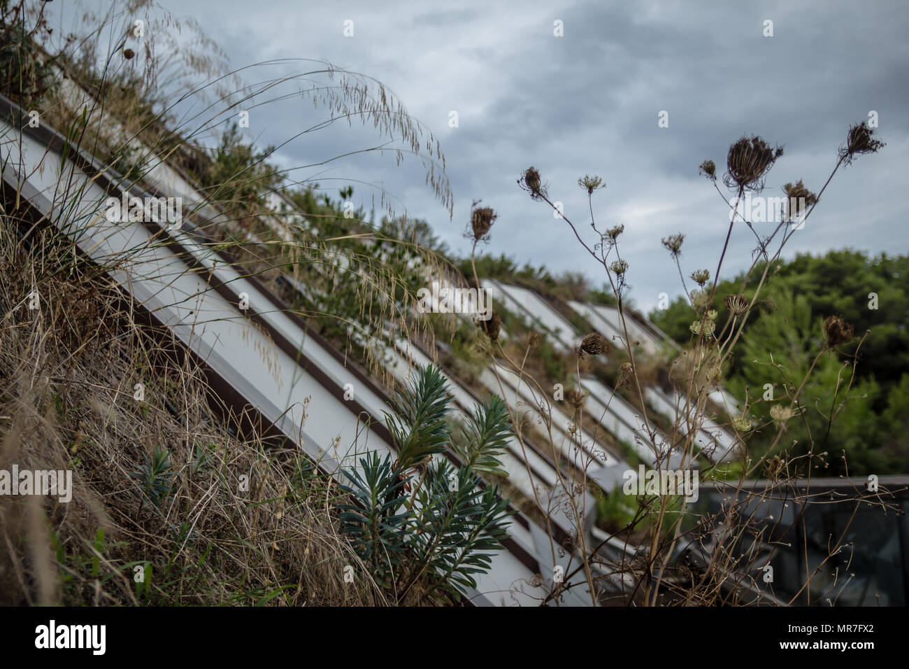 Building with grass and vegetation along balconies on cold winter day. - Stock Image