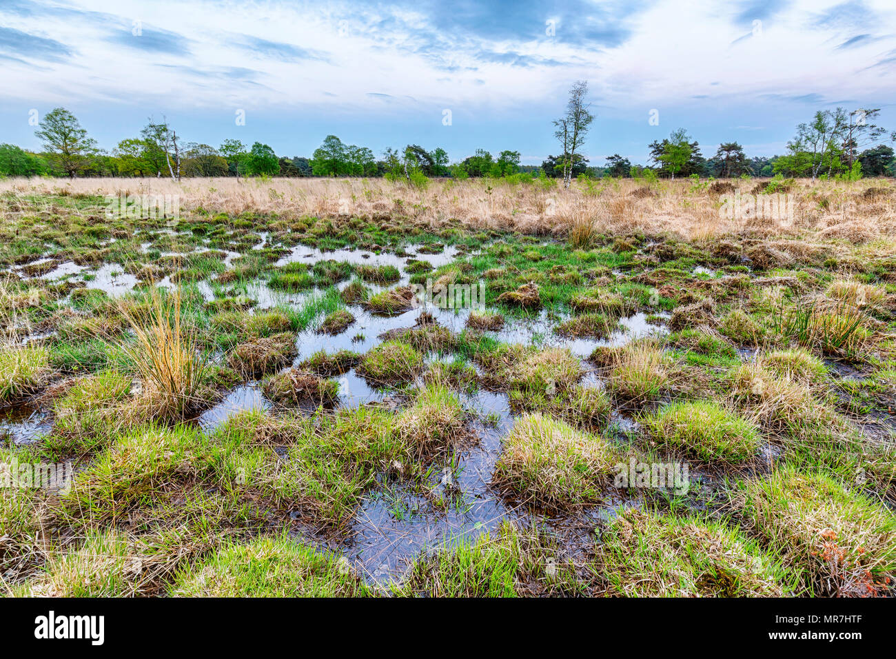 Wetlands and moorland on the national park Groote Zand near Hooghalen Drenthe during sunset. - Stock Image