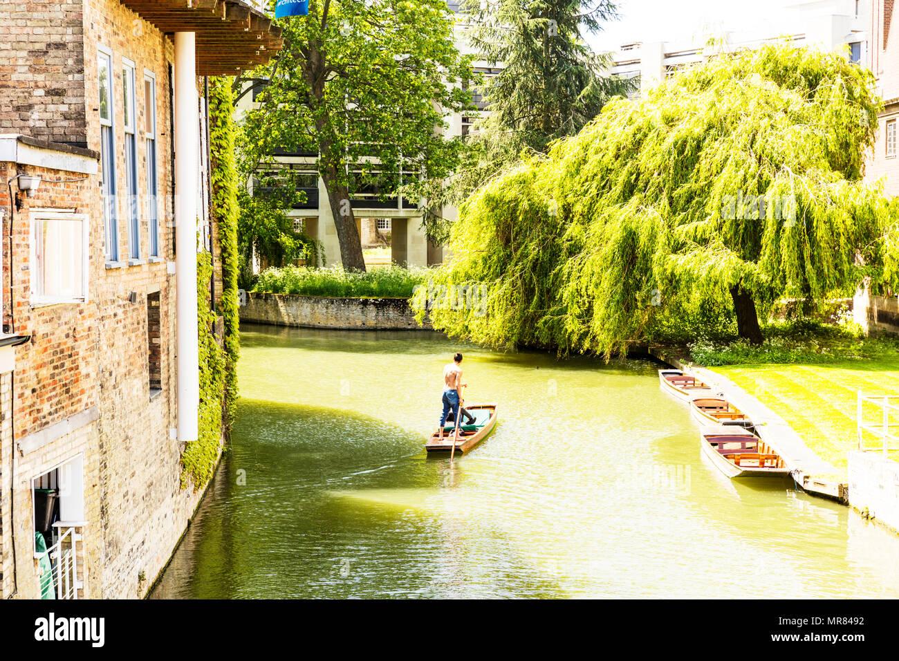 England, Cambridgeshire, Cambridge, Punting on River Cam, Punting Cambridge, Punting boat, punting, Cambridge river cam, river Cam, punter river Cam, - Stock Image