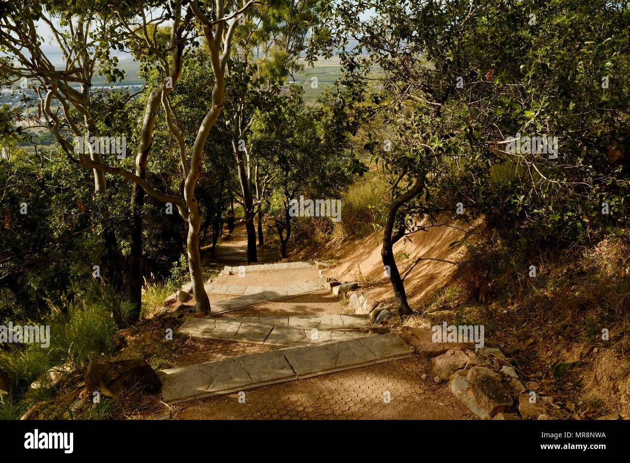 Flight of stairs through the Australian bush on Cudtheringa track, Castle Hill QLD 4810, Australia - Stock Image