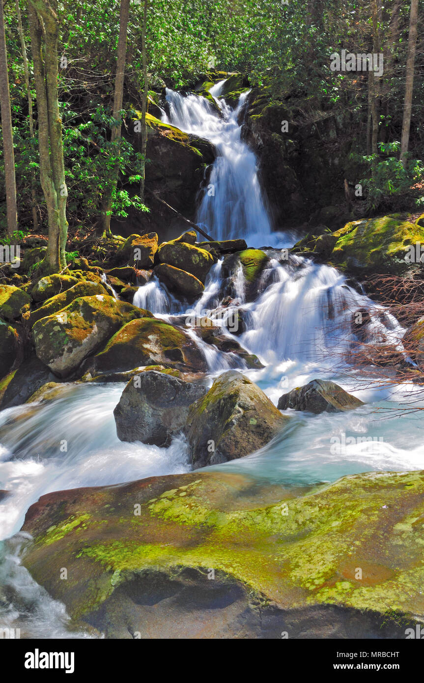 Mouse Creek Falls along the Big Creek Trail In the Smokies - Stock Image