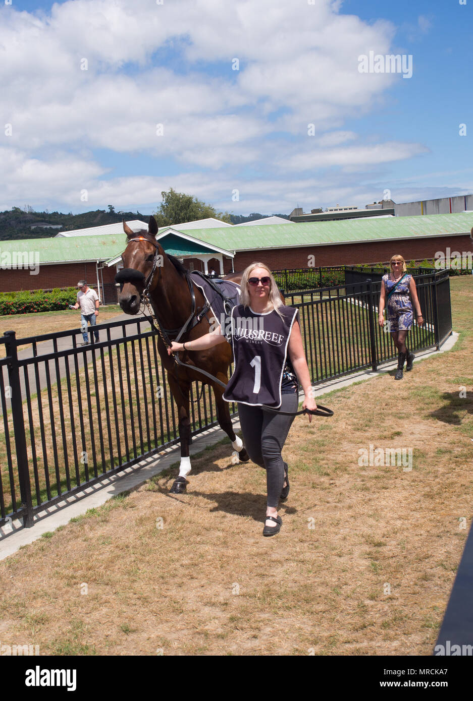 Leading Out A Horse At The Horse Races - Stock Image