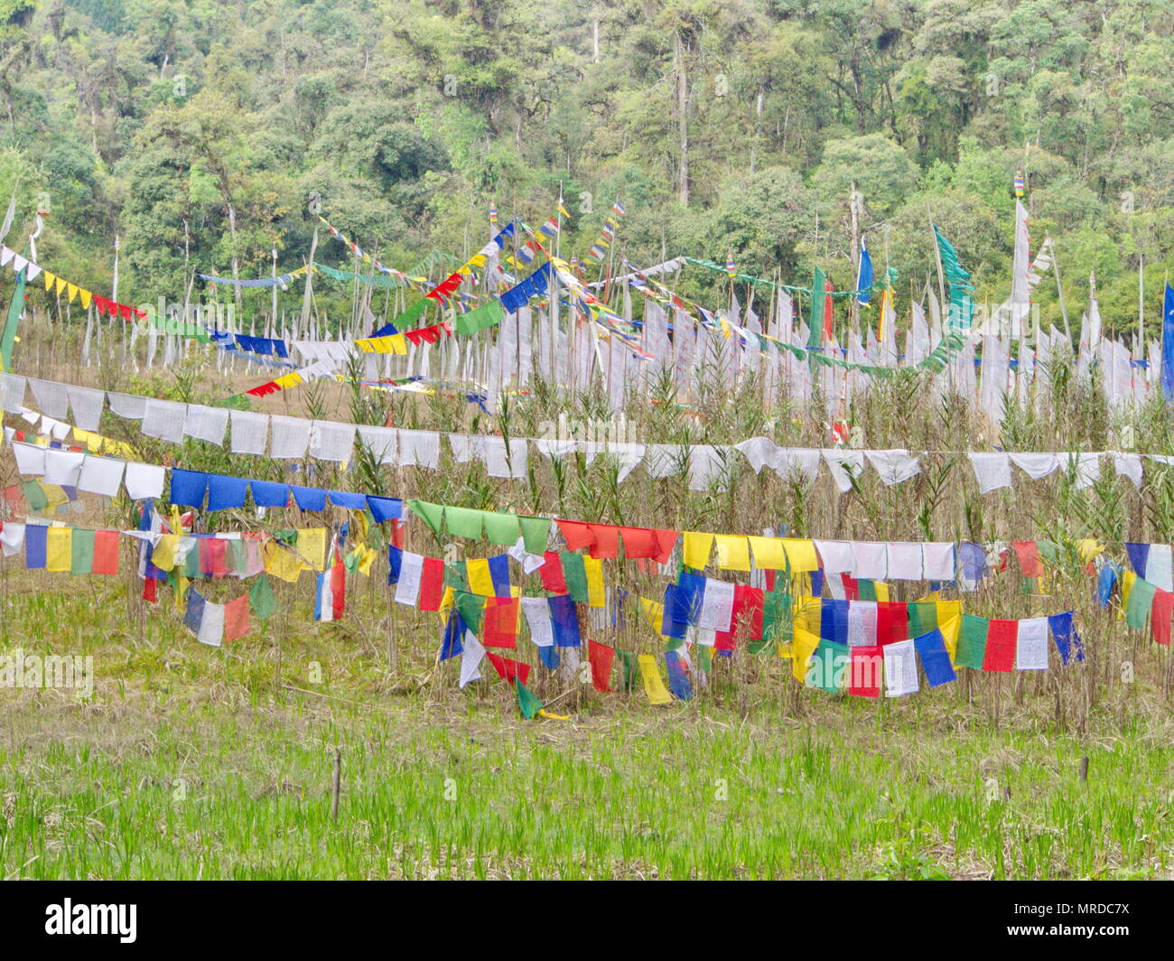 Tibetan Prayer Flag for Faith, peace, wisdom, compassion