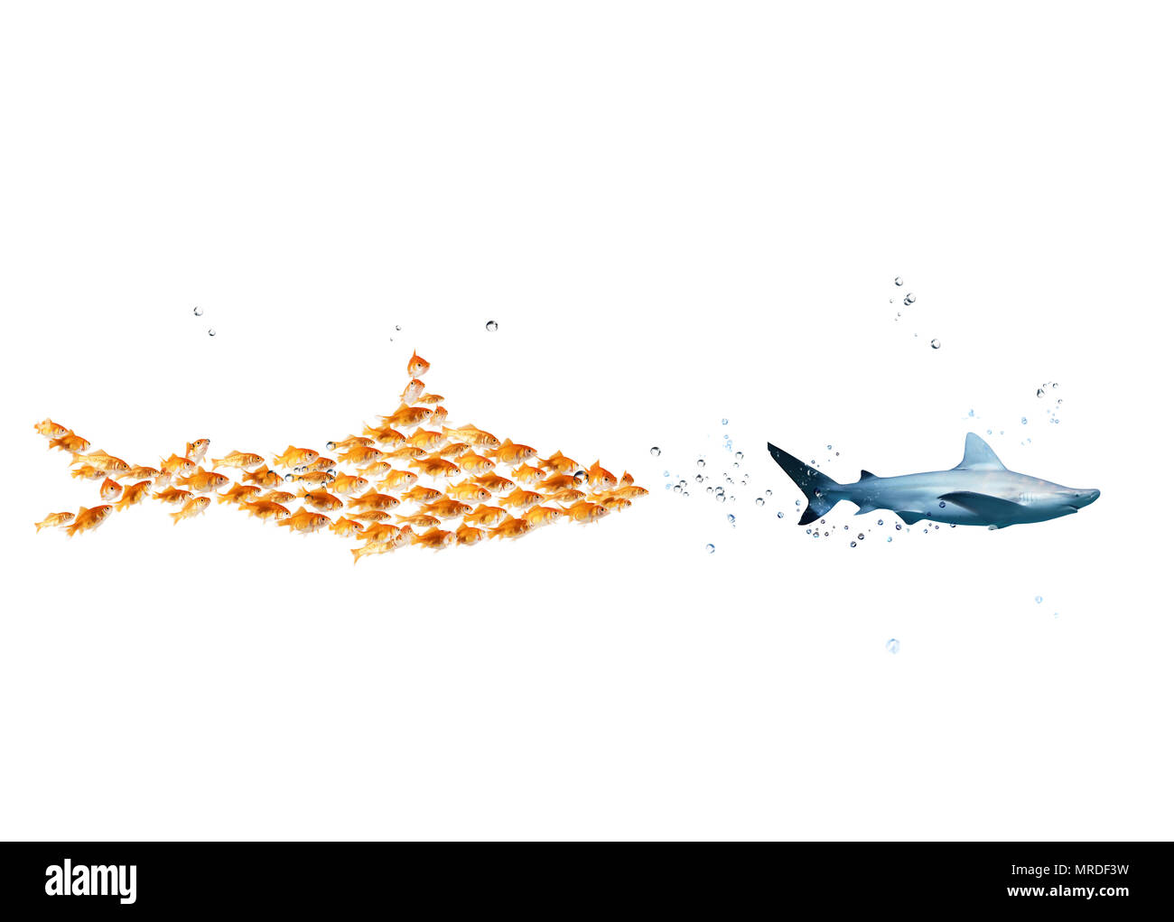 Big shark made of goldfishes attack a real shark. Concept of unity is strength, teamwork and partnership - Stock Image