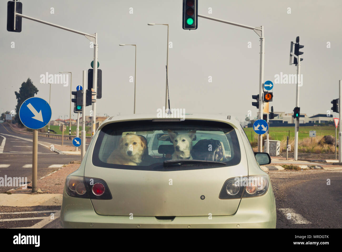 Two dogs behind the rear car window. - Stock Image