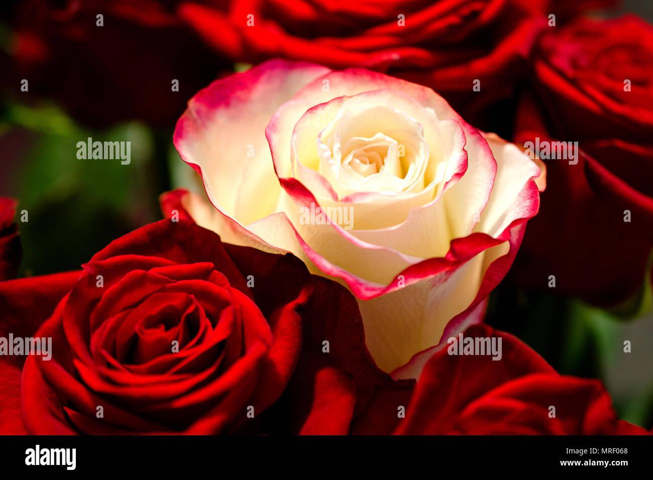 Rose Like Like Bouquet Stock Photos Rose Like Like Bouquet Stock