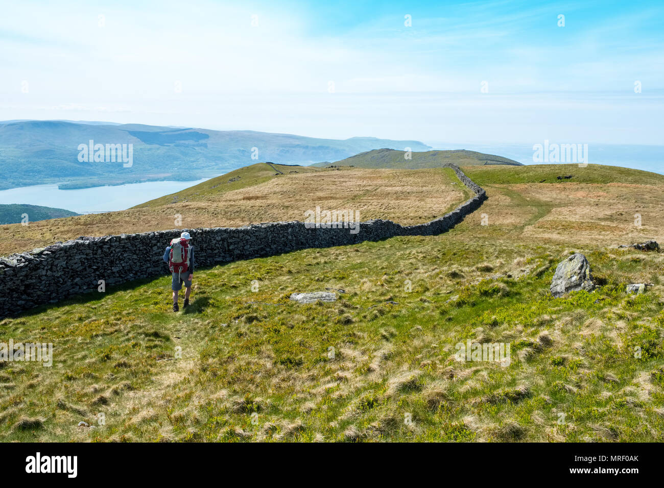 Male walker on the hills above Barmouth, Mid Wales - Stock Image