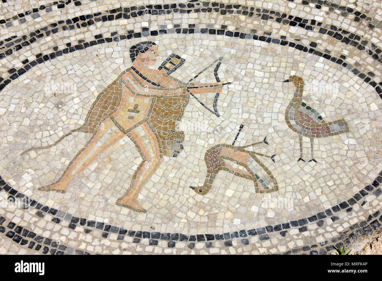 Volubilis Mosaic depicting the sixth labour of Hercules - to defeat the Stymphalian birds Stock Photo