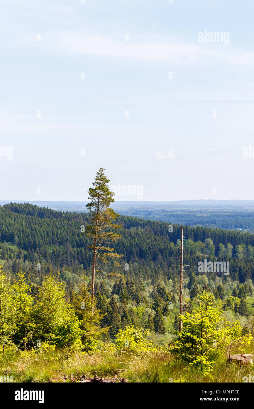 View of a forest in a rolling landscape Stock Photo