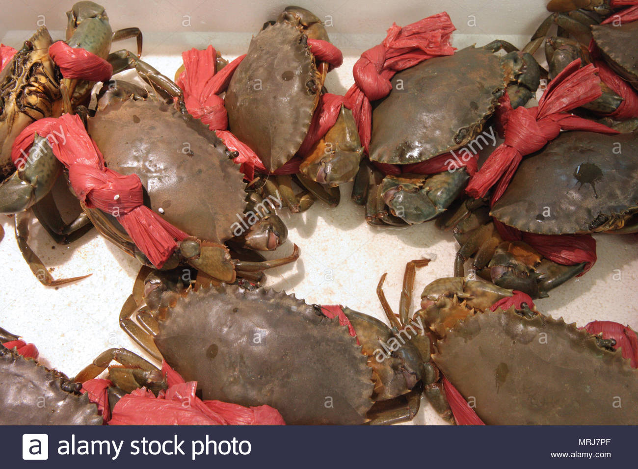 Live mud crabs at a Chinese seafood market in Toronto, Ontario, Canada. - Stock Image