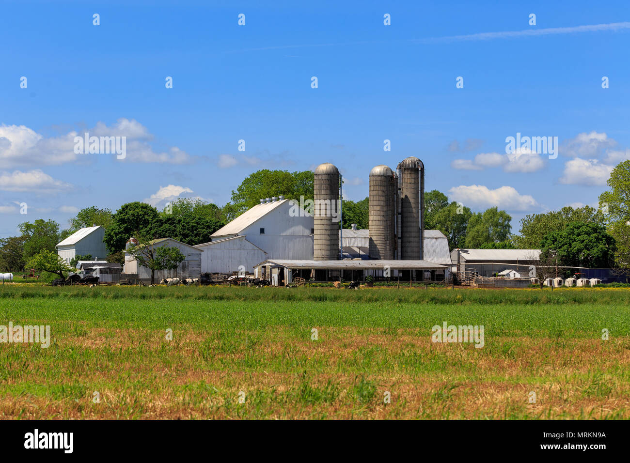 Ronks, PA, USA - May 23, 2018: A large and sprawling farm with barns on lancaster county, silver spring, new holland, nickel mines,