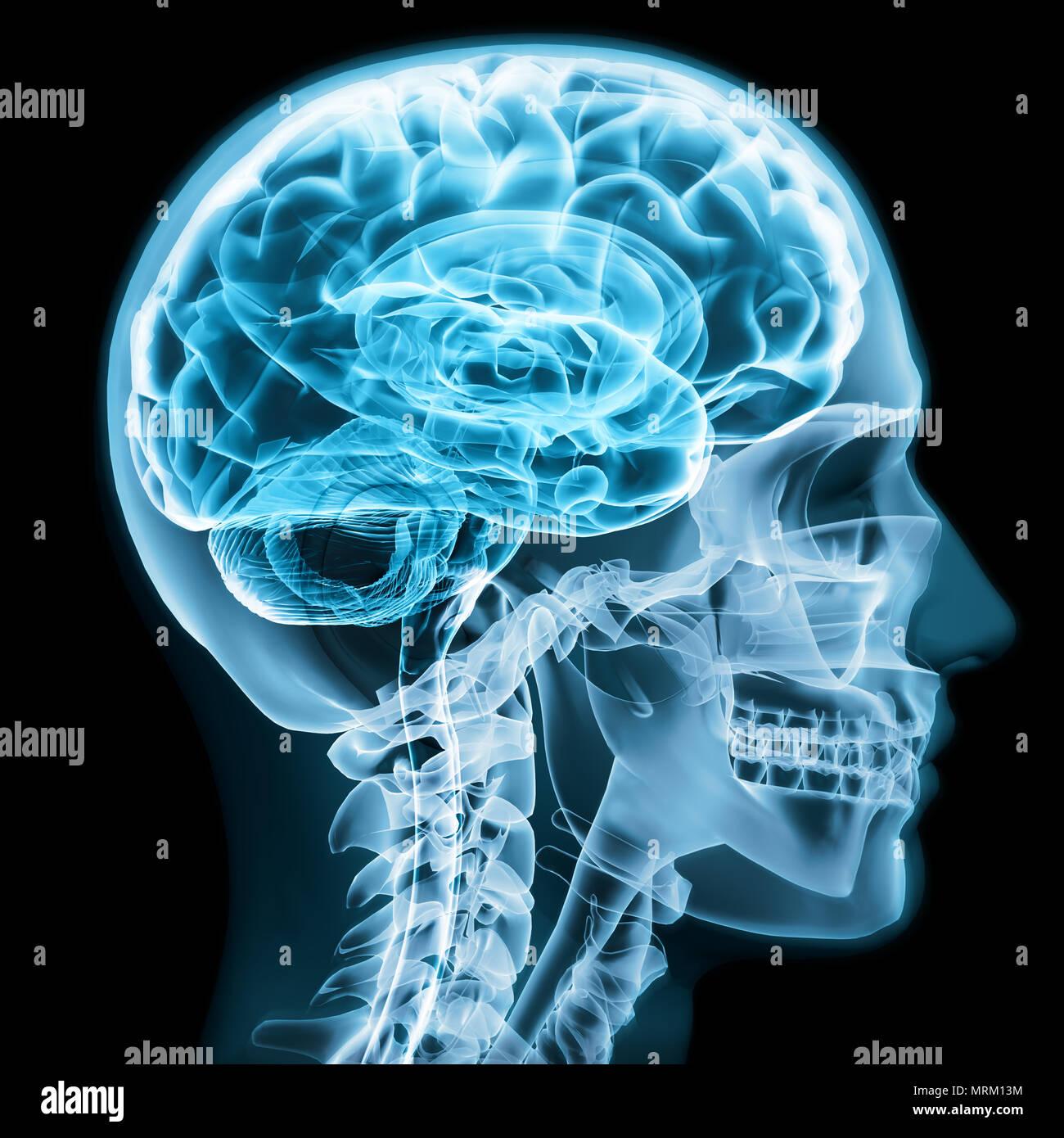 neurology neurosurgery stock photos amp neurology