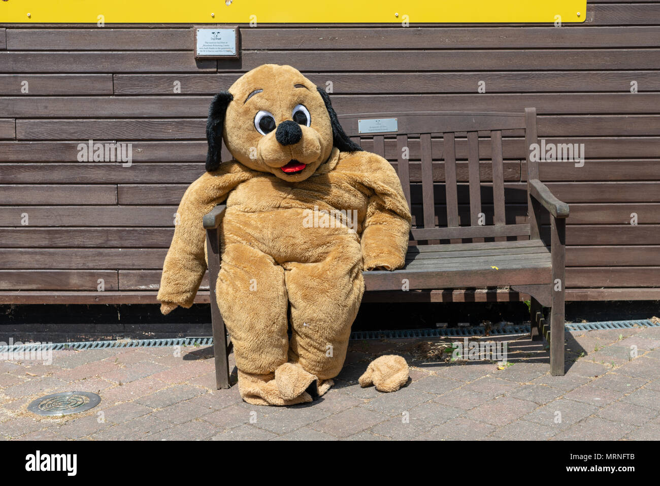Incredible Fancy Dress Dog Costume Sitting On A Wooden Bench Outside On Beatyapartments Chair Design Images Beatyapartmentscom