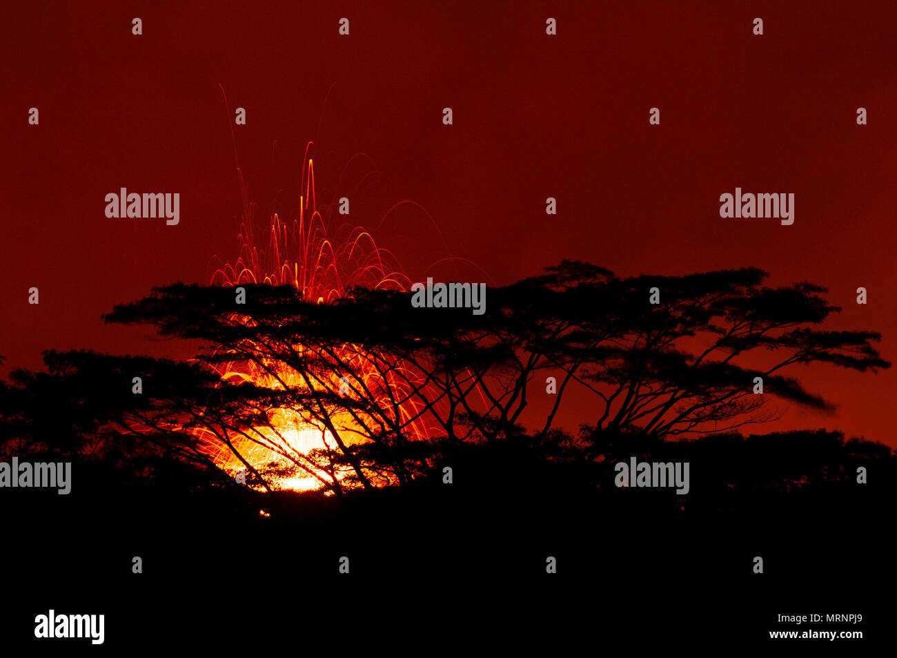 Molten lava spews hundreds of feet into the air at fissure 17 from the eruption of the Kilauea volcano May 19, 2018 in Pahoa, Hawaii. - Stock Image