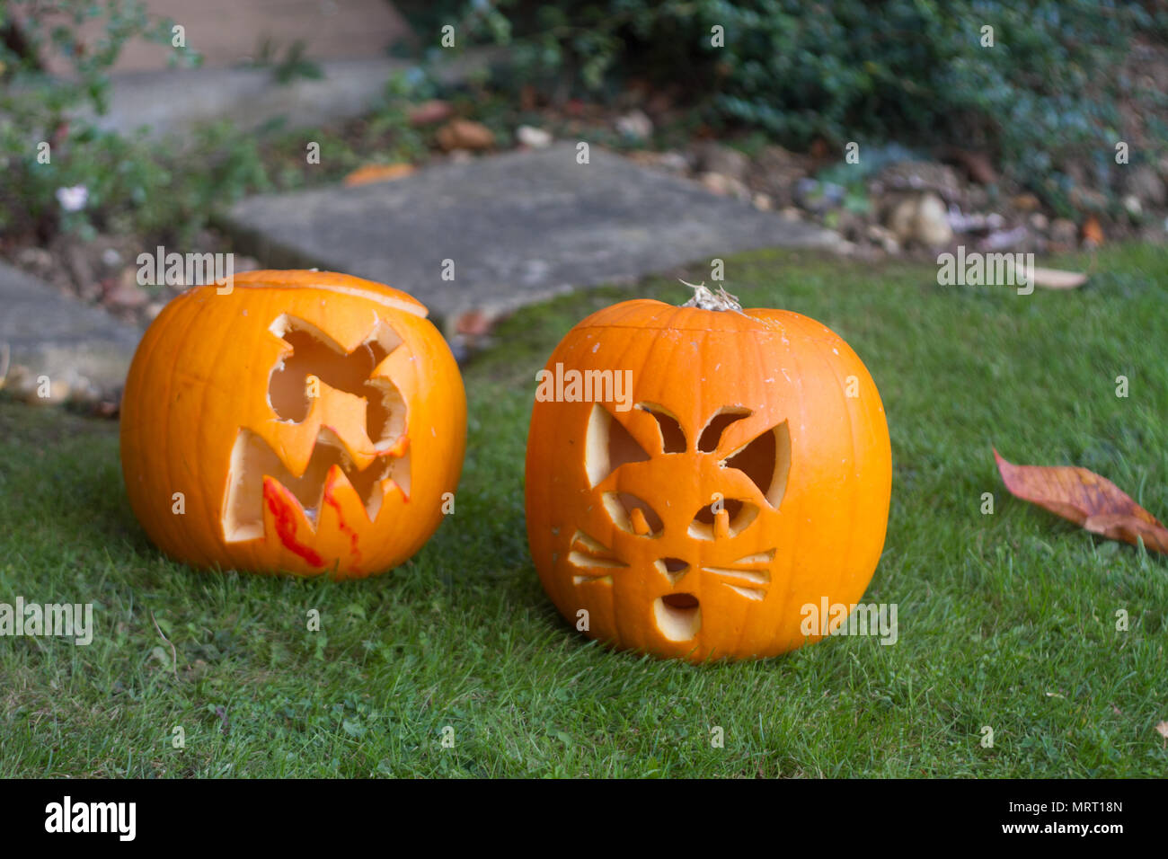 Halloween Pumpkins out on the lawn before a house cut into a bloody grimace and a cat's face - Stock Image