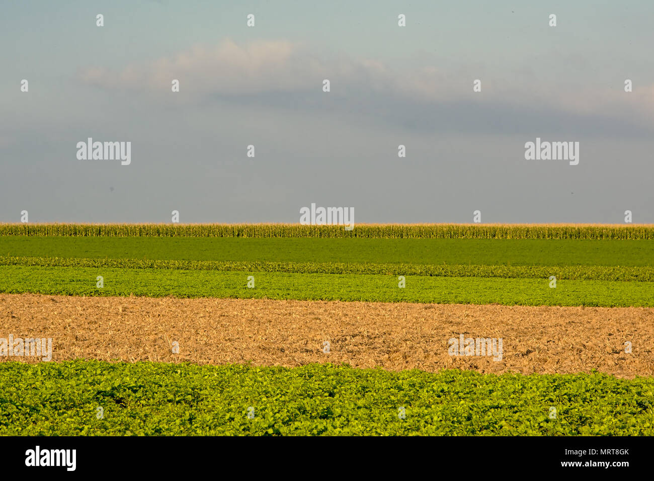 Green, brown and yellow layers of farmland under a cloudy sky in Flanders - Stock Image