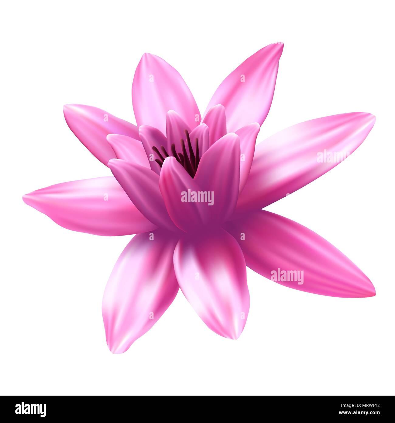 Lotus flower isolated on white background stock vector art lotus flower isolated on white background izmirmasajfo