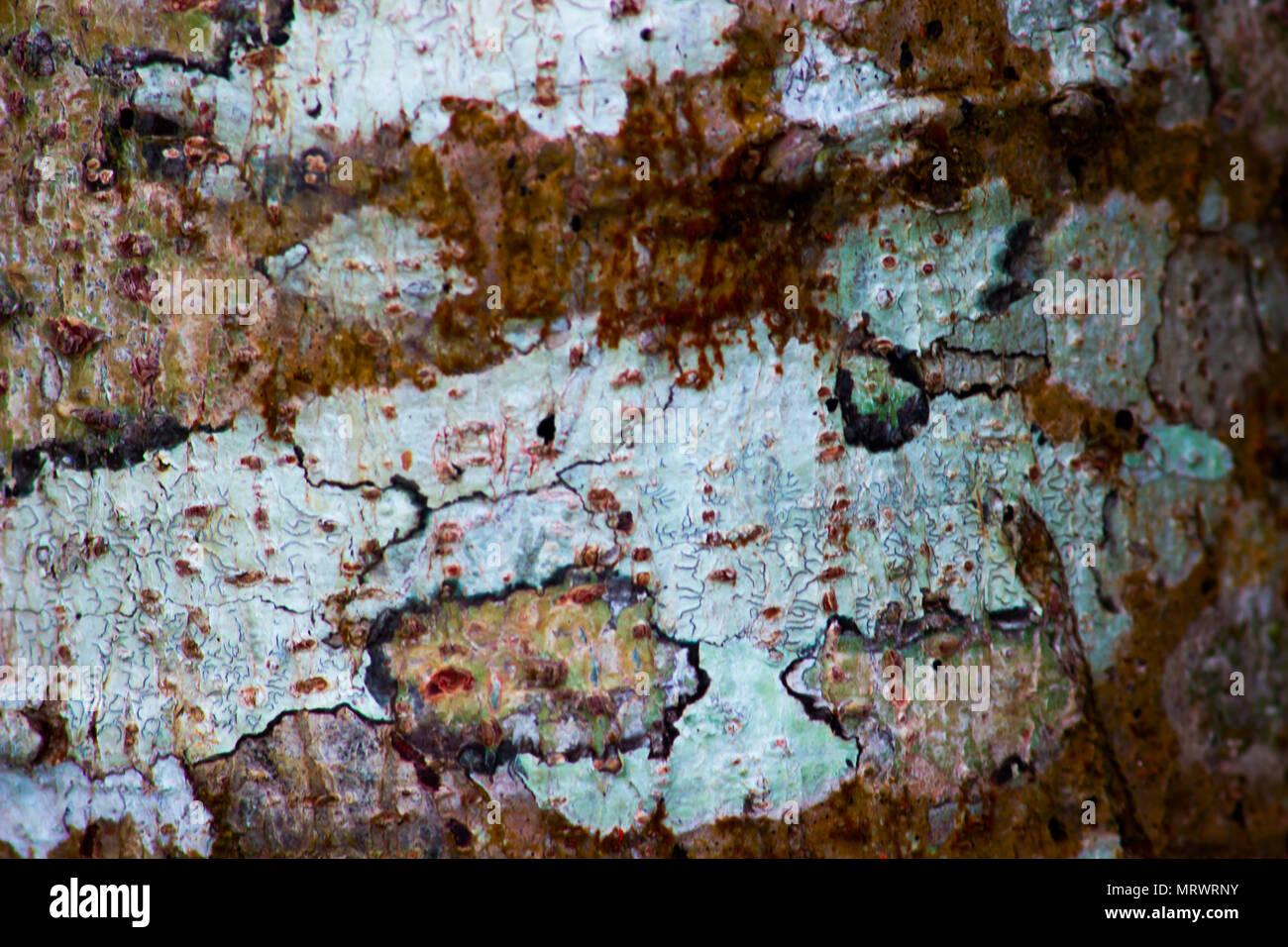 textura natural - Stock Image