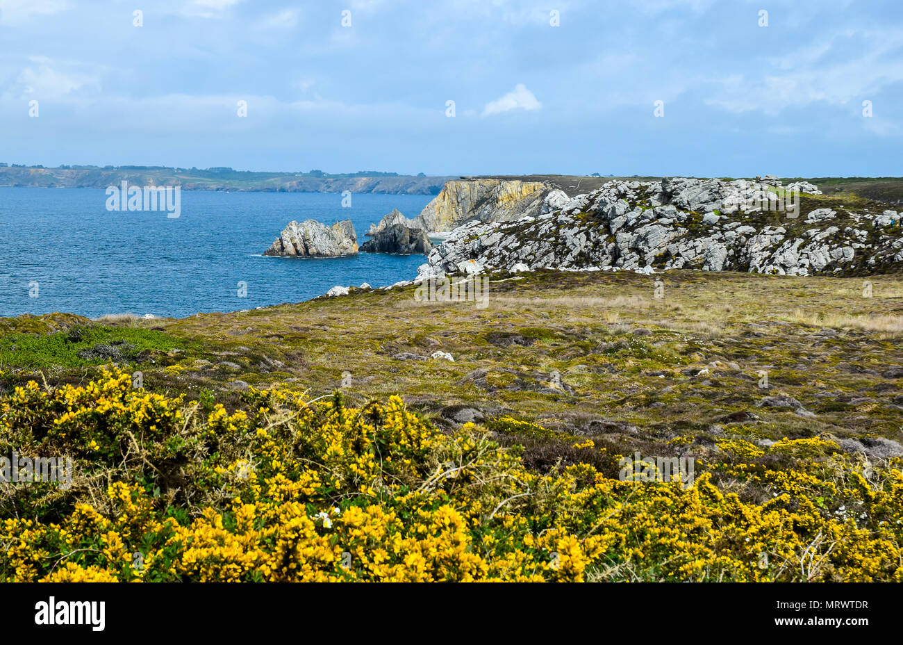 A stunning seaside view of cliffs, blue skies, and turquoise blue water in the Finistere near Camaret-sur-Mer in Brittany, France. Bright yellow gorse - Stock Image