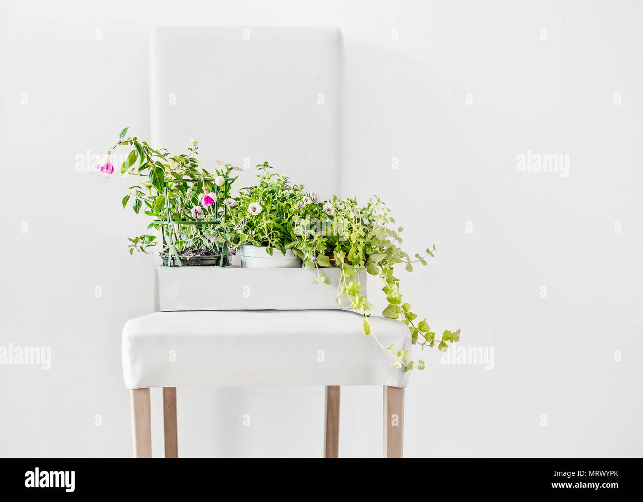 Potted flowers in paper box on white stool and copy space on the ...
